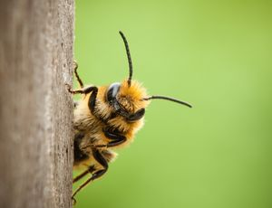 International research on balancing the diet of wild bees