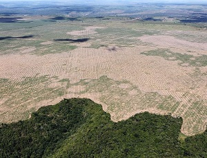Not seeing the forest for the trees: consequences of mass deforestation