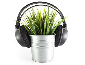 What do plants hear?